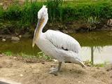 В зоопарке под Омском посетители убили краснокнижных птиц ради шашлыка