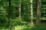 В лесу под Нижним Новгородом найден мальчик с открытой травмой головы