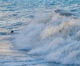 """В Сочи объяснили объявление о платных услугах спасателей на """"VIP-пляже"""""""