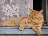 Кот «выставил за дверь» семью кемеровчан