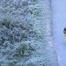Продукты, которые помогают не простудиться зимой (ФОТО)