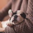Учёные рассказали, чем отличаются сны человека и животного