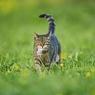 Их нравы: две женщины вступили в битву за кота (ВИДЕО)