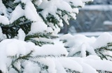 Песков негативно прокомментировал идею сделать 31 декабря выходным днём
