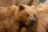МВД: В Стерлитамаке поймали медвежонка, гулявшего по городу