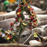 Россия готовится к ввозу молока от индийских священных коров