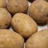 Россиян предупредили о грядущем дефиците картофеля