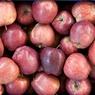 Польша предлагает США купить запретный плод