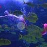 Огромный лиловый Покемон бороздит воды мирового океана