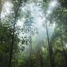 Последний из Танару: в Бразилии нашли единственного представителя индийского племени