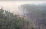 Спутники показали распространение лесных пожаров в Чернобыле