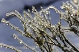 Москвичам пообещали новогодний мороз сибирского уровня