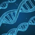 В клетках человека обнаружена новая загадочная форма ДНК