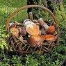 Финны собирают грибы, мимо которых проходят россияне
