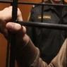 В Петербурге задержаны подозреваемые в атаке пассажиров метро