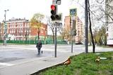 В Ржеве на пешехода упал светофор