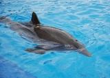 Искупаться с дельфинами-афалинами у берегов Новой Зеландии туристам больше не удастся