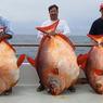 В океане обнаружена рыба, которая греет воду (ФОТО, ВИДЕО)