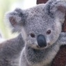 G20 начался с неформального завтрака и фотосессии с коалами