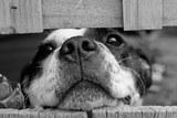 В Омске спасли собаку, несколько часов висевшую на заборе
