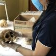 Ученые обнаружили, что даже после смерти тело человека продолжает двигаться