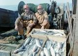 Берега Сахалина усыпало тихоокеанской сельдью, а экоактивист увидел в этом свои плюсы