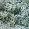 Ледяной дождь довел Чувашию до чрезвычайной ситуации