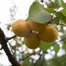Откуда экзотика: специалисты рассказали, когда стоит отдать предпочтение замороженным фруктам?