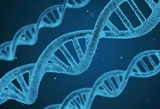 """Нобелевку"" по медицине вручили за исследование реакции клеток на кислород"