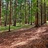 Подросток, пропавший в лесу на Кубани, вернулся домой