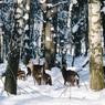 Зима в Центральной России наступит в конце ноября