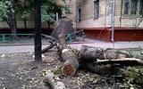 Из-за урагана в Москве скончались 6 человек, ещё 40 получили травмы