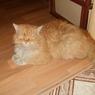 В Мурманске открыт памятник коту Семену, прошедшему 2 тысячи км
