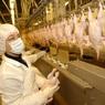 В семи регионах России замечен существенный рост цен на куриное мясо