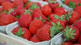 Ученые из США полагают, что ГМО-продукты могут быть полезны для здоровья человека