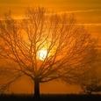 Найдено самое высокое в мире дерево