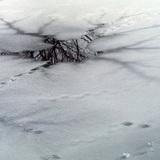 Бензовоз с 20 тоннами топлива провалился под лёд в Иркутской области