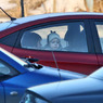 Госдума введёт запрет на курение в автомобилях при детях