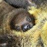 Московские ленивцы остались без тепла
