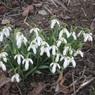 Астрономическая весна наступит в воскресенье