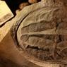Палеонтолог нашел неизвестное науке существо