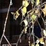 МЧС предупреждает жителей регионов Центральной России о резком ухудшении погоды