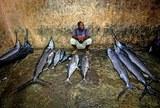 В Токио на рыбном аукционе продали самого большого тунца