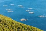Норвежским рыбакам так помешали «русские лососи», что «чужую» рыбу приказано убивать