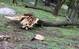 Число жертв урагана в Москве увеличилось до четырёх человек