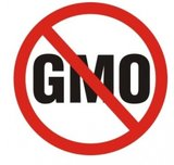 Правила ВТО вынуждают Россию отказаться от ГМО