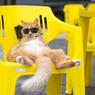 Как узнать характер кота по его физиономиии? (ФОТО, ВИДЕО)