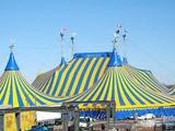 Артистка цирка сорвалась с пятиметровой высоты