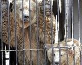 Животные в уссурийском зоопарке оказались в западне из-за паводка