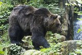 Около одного из домовладений в селе Ордынка-1 под Сочи медведь растерзал женщину